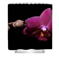 Pink Orchid Shower Curtain by Tommytechno Sweden