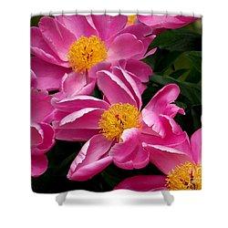 Pink Petals Shower Curtain by Eunice Miller