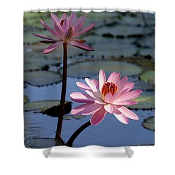 Pink Water Lily In The Spotlight Shower Curtain by Sabrina L Ryan