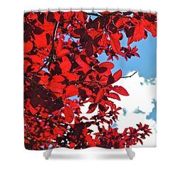 Plum Tree Cloudy Blue Sky 3 Shower Curtain by CML Brown