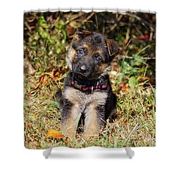 Pretty Puppy Shower Curtain