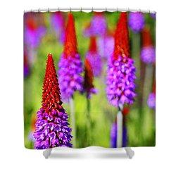 Primula Vialli Shower Curtain by Craig B