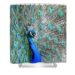 Shower Curtain featuring the photograph Proud by Deena Stoddard