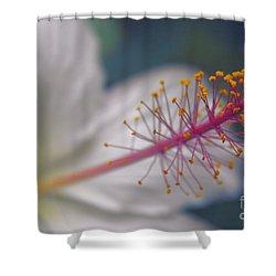 Shower Curtain featuring the photograph Pua Aloalo - Koki'o Ke'oke'o - Hibiscus Arnottianus - Hawaiian White Hibiscus  by Sharon Mau