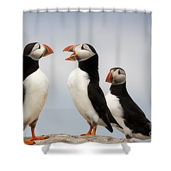 Puffins Chat On The Farne Islands Great Britain Shower Curtain