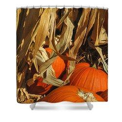 Pumpkin Harvest Shower Curtain by Joann Vitali