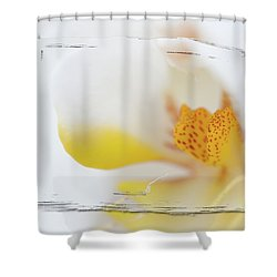 Pure White Shower Curtain