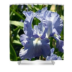 Purple Bearded Iris Shower Curtain by Ellen Henneke