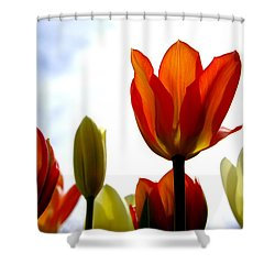 Shower Curtain featuring the photograph Reaching For The Sun by Marilyn Wilson