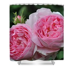 Rose Constance Spry Shower Curtain by Sabine Edrissi
