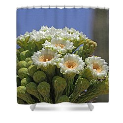 Saguaro Flower And Buds  Shower Curtain by Tom Janca