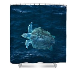 Sea Turtle Shower Curtain by Tammy Schneider