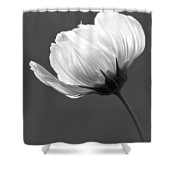 Simply Beautiful In Black And White Shower Curtain by Penny Meyers