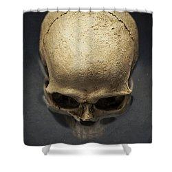 Skull  Shower Curtain by Edward Fielding