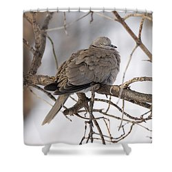 Sleeping Beauty Shower Curtain by Lori Tordsen