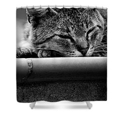 Shower Curtain featuring the photograph Sleeping by Laura Melis