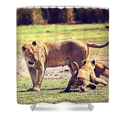 Small Lion Cubs With Mother. Tanzania Shower Curtain by Michal Bednarek