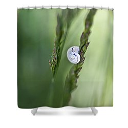 Snail On Grass Shower Curtain