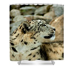 Snow Leopard Shower Curtain by Daniel Precht