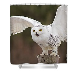 Snowy Owl Shower Curtain by Les Palenik