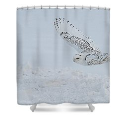 Shower Curtain featuring the photograph Snowy Owl #2/3 by Patti Deters