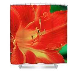 Red, Orange And Yellow Lily Shower Curtain