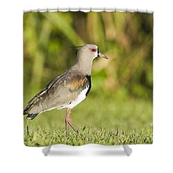 Southern Lapwing Shower Curtain