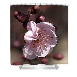 Spring Blossom Shower Curtain by Joy Watson