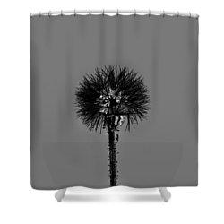 Spring Dandelion Shower Curtain by Tommytechno Sweden