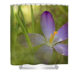Spring Haze Shower Curtain by Caitlyn  Grasso