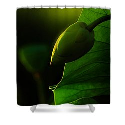 Still Sleeping Shower Curtain