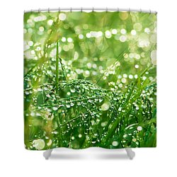 Summer Morning Shower Curtain by Mircea Costina Photography
