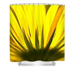 Shower Curtain featuring the photograph Sunburst Daisy by Sabine Edrissi