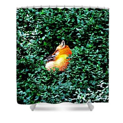 Shower Curtain featuring the photograph Sweet Slumber by Deena Stoddard