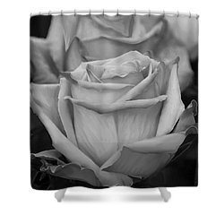 Tea Roses In Black And White Shower Curtain