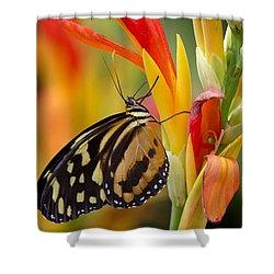The Postman Butterfly Shower Curtain by Saija  Lehtonen