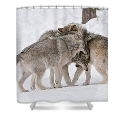 Timber Wolves Shower Curtain