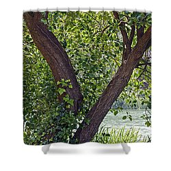 Shower Curtain featuring the photograph Tree At Stow Lake by Kate Brown