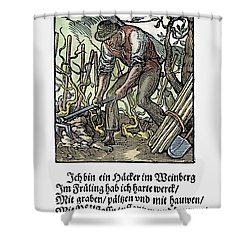 Shower Curtain featuring the painting Vinegrower, 1568 by Granger