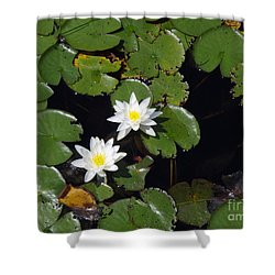Shower Curtain featuring the photograph 2 Water Lily by Robert Nickologianis