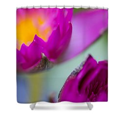 Waterlily Dream Shower Curtain