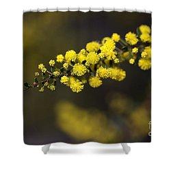 Wattle Flowers Shower Curtain by Joy Watson