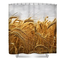 Wheat Shower Curtain by Elena Elisseeva