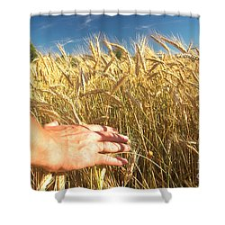 Wheat Field Shower Curtain by Michal Bednarek