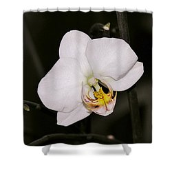 Shower Curtain featuring the photograph White Orchid by Sherman Perry