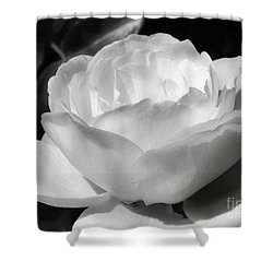 White Rose Shower Curtain by Amy Williams