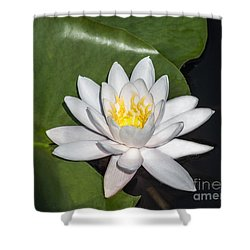 Shower Curtain featuring the photograph White Water Lily by Arlene Carmel