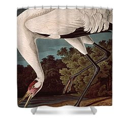 Whooping Crane Shower Curtain by John James Audubon