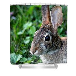 Wild Rabbit Shower Curtain by J McCombie