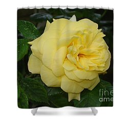 Shower Curtain featuring the photograph Yellow Rose  by Katy Mei